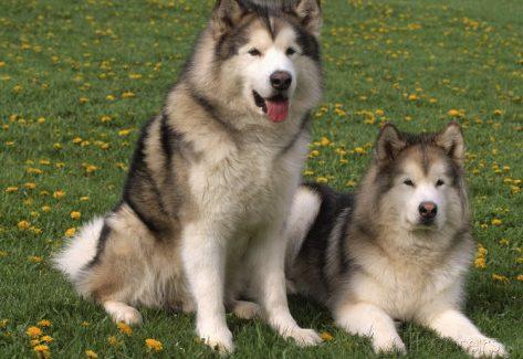köpek eğitimleri alan koruma