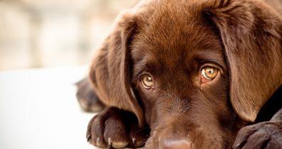 Köpek pansiyonu Kemerburgaz