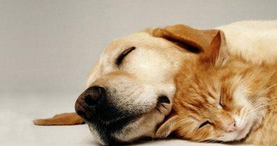 Ücretsiz Köpek Sahiplendirme