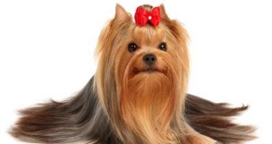 Secereli köpek satılık