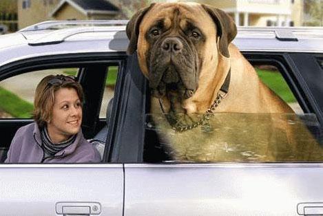 Köpek pansiyonu Kocaeli