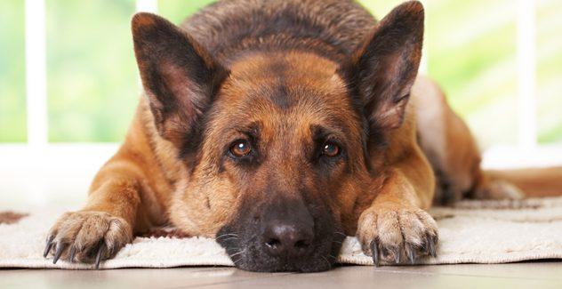 Köpek pansiyonu Bostancı