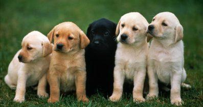 Köpek pansiyonu fatih