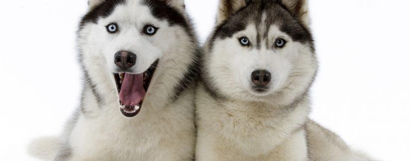 Köpek eğitimi Silivri