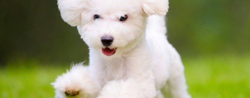 Köpek eğitimi cezalandırma
