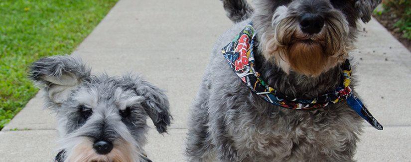 Köpek eğitimi saldır komutu