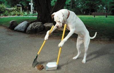 Eğitimli Köpek Satışı