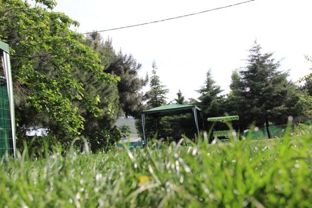 Pitbull Satılık Yavru İstanbul